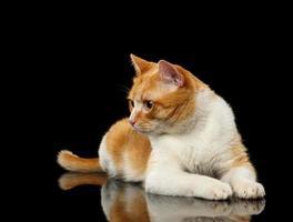 liggande ingefära katt förvånad tittar på vänster på svart spegel foto
