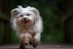 hund springer mot kameran foto