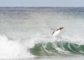 surfa tidvattnet foto