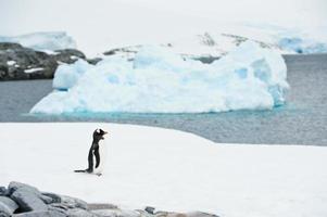 isberg och gentoo-pingvin