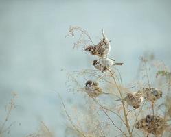 sparv fågel sitter på en gammal pinne. frusen sparv fågel vinter foto