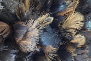 närbild kycklingfjäder foto