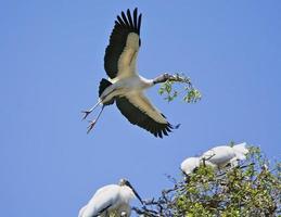 trä stork flygning foto