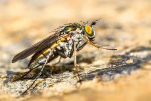 porträtt av en fluga foto