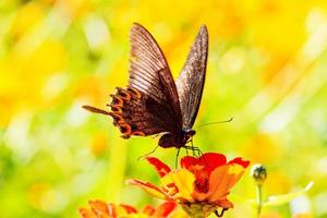 fjäril på blommor foto