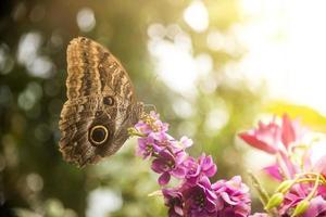 fjäril på blomma vid solsken foto