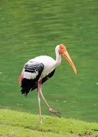 målad stork foto