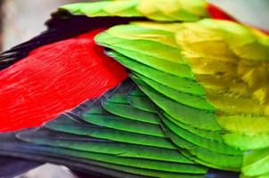 papegoja tropisk fågel foto