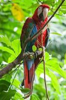 vacker papegoja foto