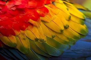 färgglada fjädrar av en skarlakansröd ara foto