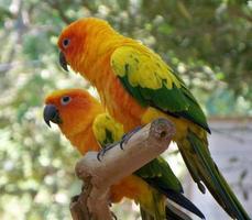 två perched papegojor foto