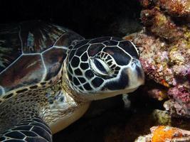 sköldpadda på nära håll foto