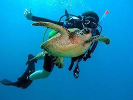 dykare med havssköldpadda
