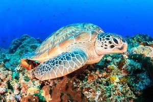 sköldpadda på havsbotten foto