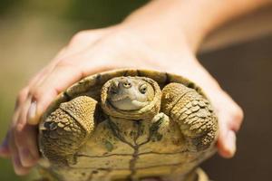 fångad sköldpadda