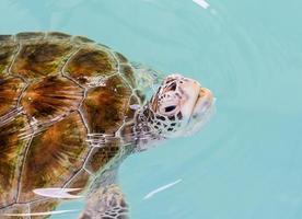 sköldpadda foto