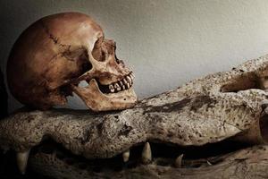 mänsklig skalle krokodil foto