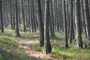 skogsstig på solig dag foto