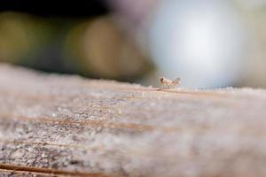 gräshoppa foto