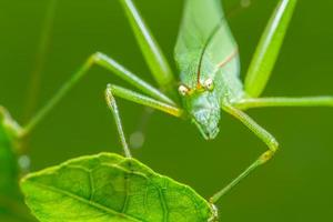 konstig gräshoppa