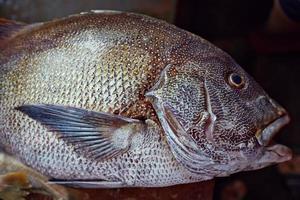 färsk fisk på fiskmarknadsräknan. foto