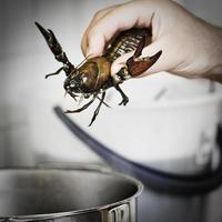 matlagning kräftor foto