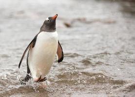 pingvin ankomst foto