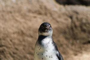 pingvin foto