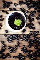 svarta vinbär sylt foto
