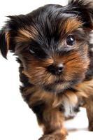 härlig valp till en hund foto