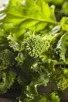 organisk rå grön broccoli rabe rapini