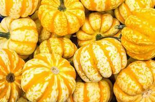 orange vinter squash på displayen foto