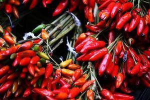 röd het chilipeppar foto