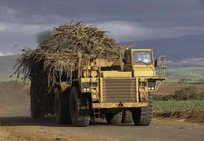 lastbil med sockerrör foto