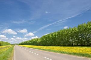 landsväg. väg under hösten