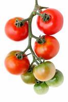 röda och gröna tomater foto
