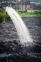 vårvattning av frön i trädgården foto