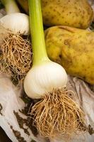 vitlök och potatis foto
