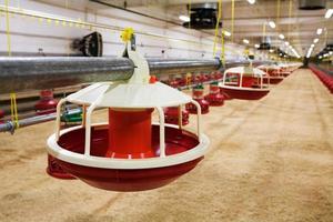 automatiserad fjäderfäodling foto