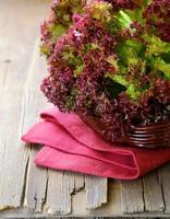 färsk ekologisk lila sallad (lollo rosso) foto