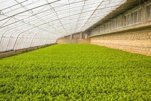 vegetabiliska växthus foto