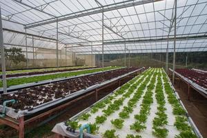 hydrogrönsakslantgård foto