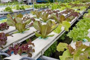 organisk hydroponisk grönsaksträdgård i Thailand foto