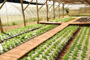 färsk sallad som växer i ett hydroponics-system i växthus foto