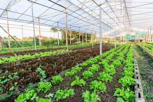 hydroponic gård i norra Thailand foto
