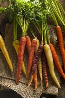 färgglada mångfärgade råa morötter foto