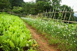grönsakssäng med vacker blomma foto