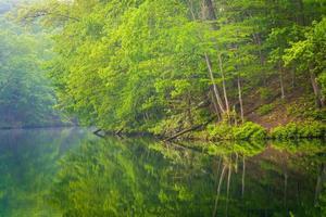 träd reflekterande i prettyboy reservoar, i baltimore län, ma