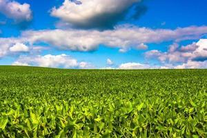 fält av sojabönor, i lantliga baltimore län, Maryland. foto