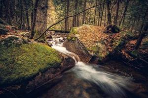 bäck, stenar och mossa foto